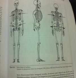 skeleton posture